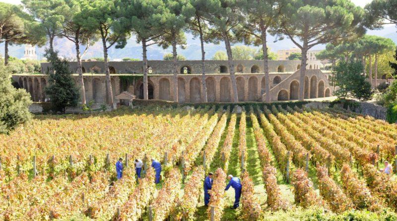 Pompei vitigni