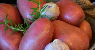 patata rossa di montagna