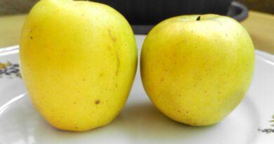 La Limoncella, una piccola mela dalle grandi virtù