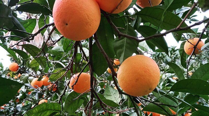 Un arancia al giorno