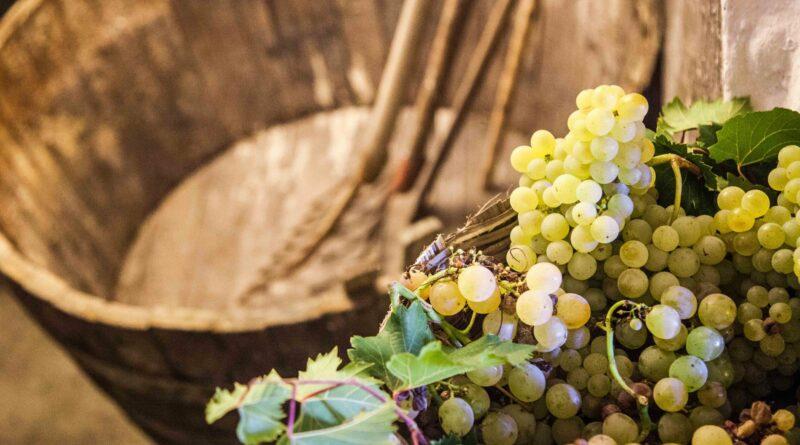 Ischia, itinerari di vino