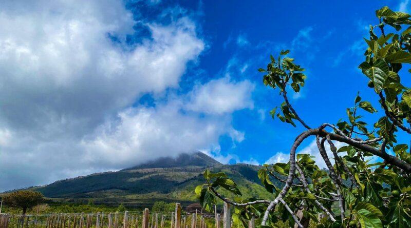 Vesuvio lombrichi per ottimi volcanic wine
